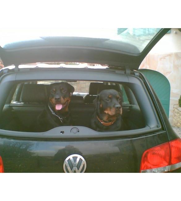 Pet Nakil Hizmeti ( Pet Taksi )